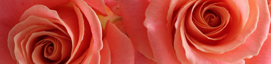 Peach rose wedding flowers - Miss Piggy