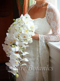 Orchid Flower Picture on Here Is A Sample Of Some Of The Warwick Weddings That We Have