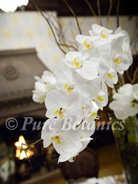 Phalaenopsis orchid centrepiece at a wedding reception