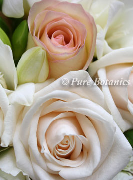 Soft peach and cream rose - close up of bridal bouquet