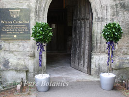 bay trees decorated with purple ribbons for a wedding at Wrens Chapel Wroxall Abbey