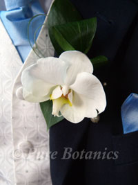 White orchid wedding buttonhole