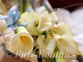 White calla lilies for a sheath bridal bouquet
