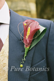 a deep red burgundy calla lily buttonhole on a groom's jacket