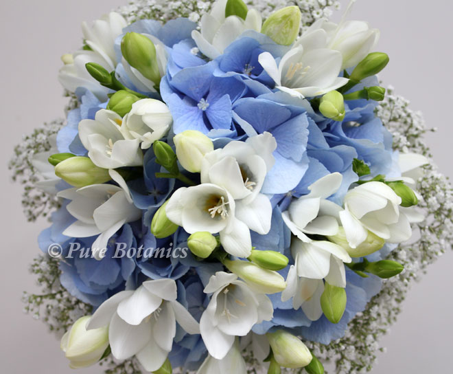 Blue hydrangea posy bouquet featuring ivory freesias and gypsophila.