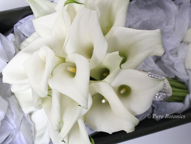 Handtied posy bouquet of white calla lilies.