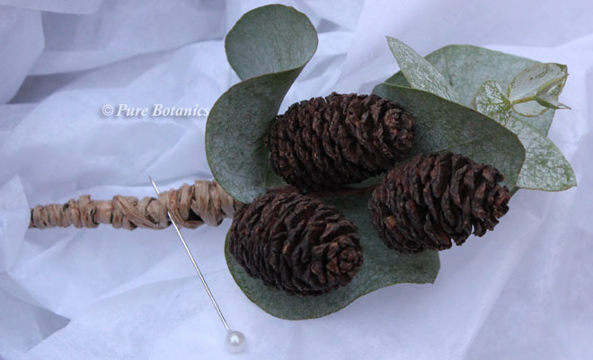Fir cone buttonhole backed with eucalyptus.