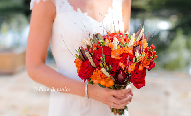 Fall posy bouquet featuring red Grand Prix roses orange freesias and wheat for a country wedding.