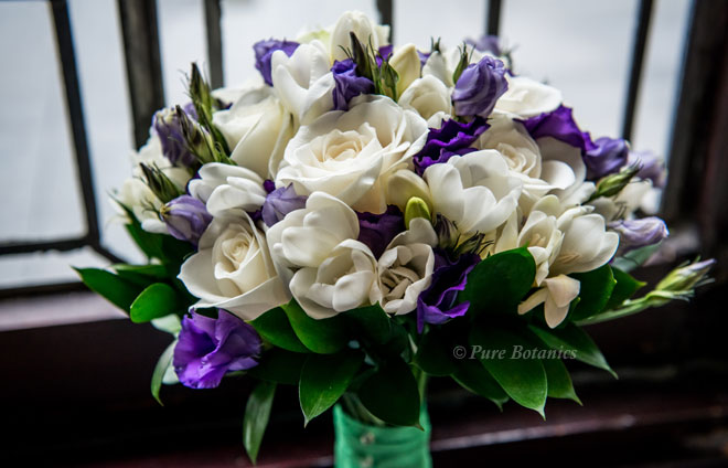 Ivory roses, freesias and purple lisianthus in a brides posy bouquet.