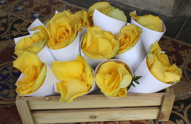 Yellow rose petal in cones for confetti.